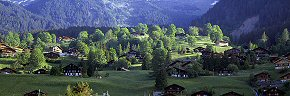 chalets and trees at grindelwald