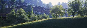 trees and chalets, grindelwald