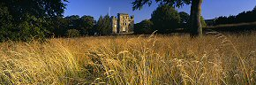 dry grass at hylton castle