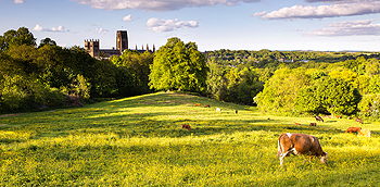 durham cow card